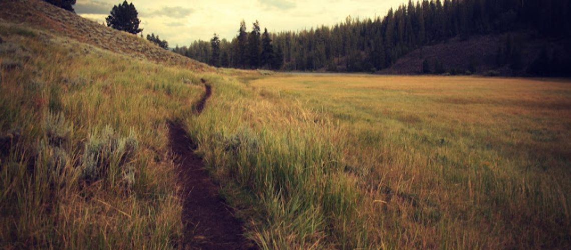 path-meadow-track-trail